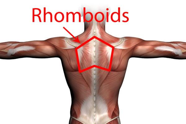 Stretches to Strengthen your Rhomboid Muscles